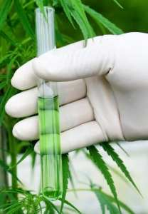 cannabis, lab testing, cannabis testing, pesticides, medical cannabis, recreational cannabis, legalization, USA, grow ops, regulation
