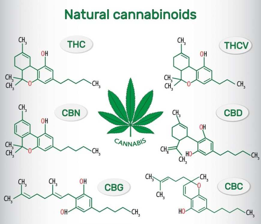 cannabis, cannabinoids, sleep, CBD, THC, endocannabinoid system, entourage effect, research, sleep schedule, legalization