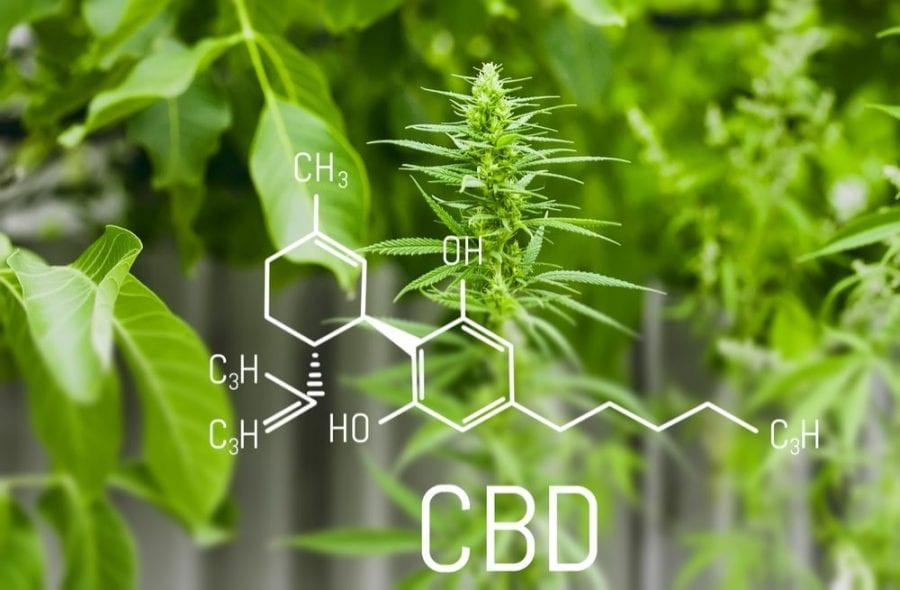 CBD, cannabis, THC, cannabinoids, CBD tolerance, epilepsy, seizures, endocannabinoid system, medical cannabis, legalization