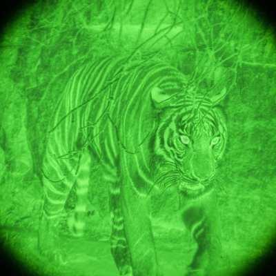 tiger as seen through night vision googles