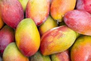 mangos and THC
