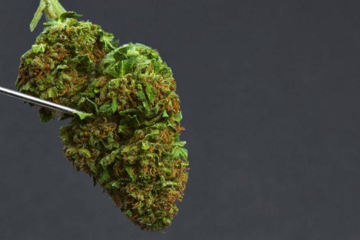 Skunk weed, super skunk, weed, dank, cannabis, elevated, medicated, medical cannabis, weed