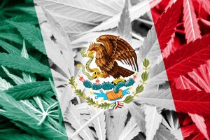 cannabis, Mexico, USA, Canada, medical cannabis, recreational cannabis, legalization, legislation, Supreme Court, drug wars, cartels, prohibition, recreational cannabis