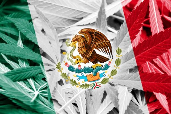 cannabis, Mexico, USA, Canada, medical cannabis, recreational cannabis, legalization, legislation, Supreme Court, drug wars, cartels, prohibition, recreational cannabis