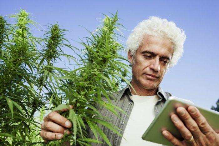 DNA, cannabis genome, genome sequencing, genomics, plant genetics, growth process