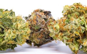 good weed vs bad weed, dank buds, good flower, sticky icky, stinky, medical cannabis, dispensary, budtender, quality, high quality, weed, cannabis, pot