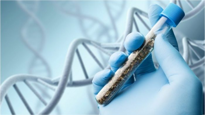 hemp, cannabis, cannabinoids, CBD, THC, cannabis sequencing, genome sequencing, genetic sequencing