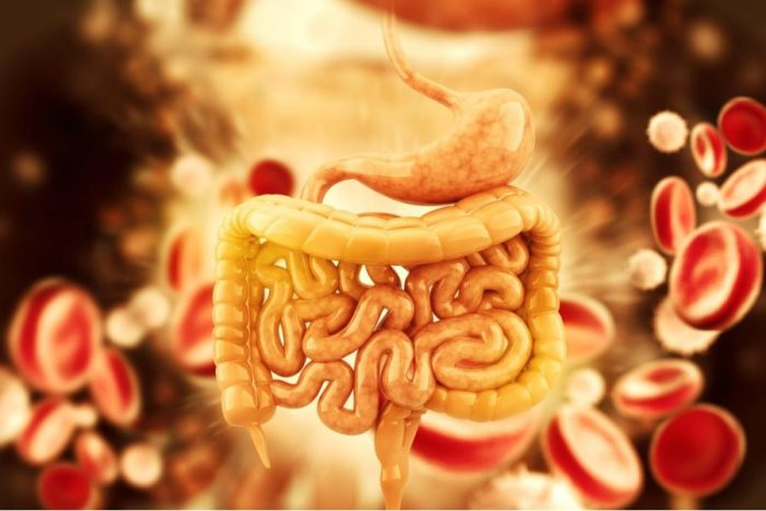 gut bacteria which can be in your genes is represented