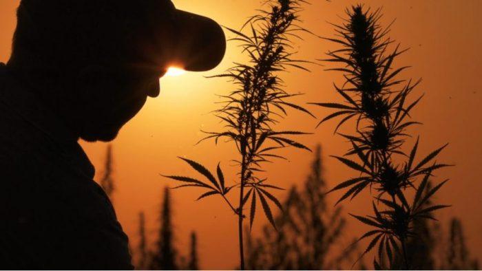 USDA, cannabis, medical cannabis, recreational cannabis, THC, CBD, hemp, cannabinoids, legalization