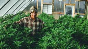 industrial hemp alternatives
