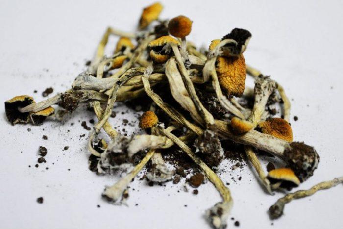 shroomery, magic mushroom dispensary
