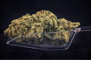 cannabis strains, medical cannabis, recreational cannabis, strains, research, breeding, top shelf, top shelf cannabis