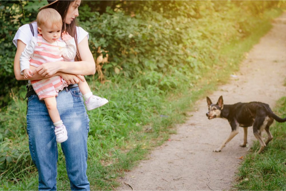 animal aggression represented by woman protecting young child from dog