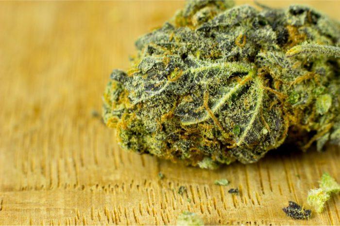 cannabis bud to press into RSO