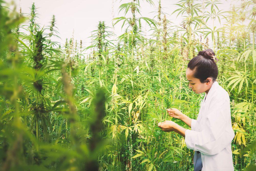 scientist in cannabis field