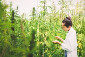 scientist in cannabis field