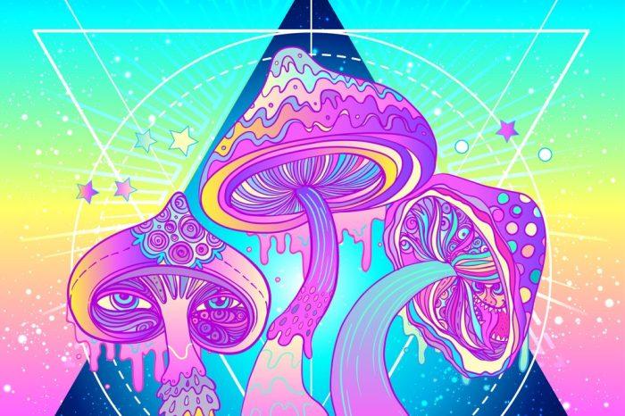 psychedelics mushrooms