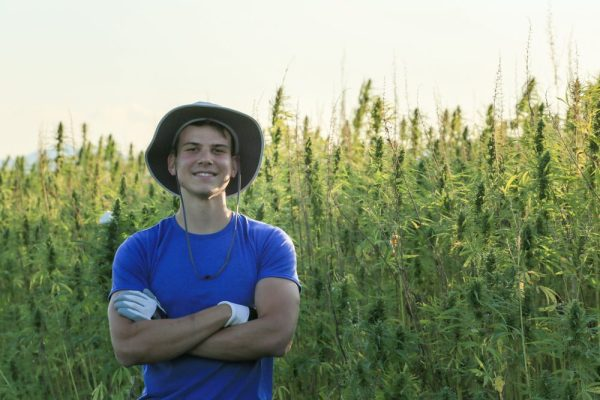 young hemp for cbd farmer