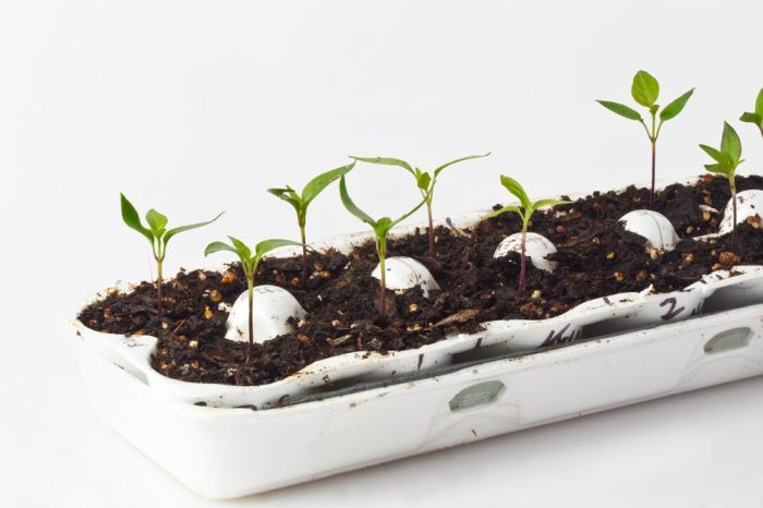 living soil with plants growin out of egg carton