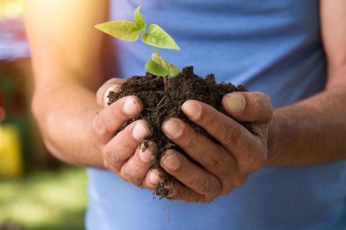 man holding fertile cannabis plant