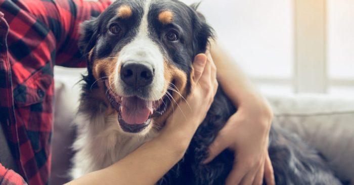 Ukraine scandal beautiful collie mix dog not involved