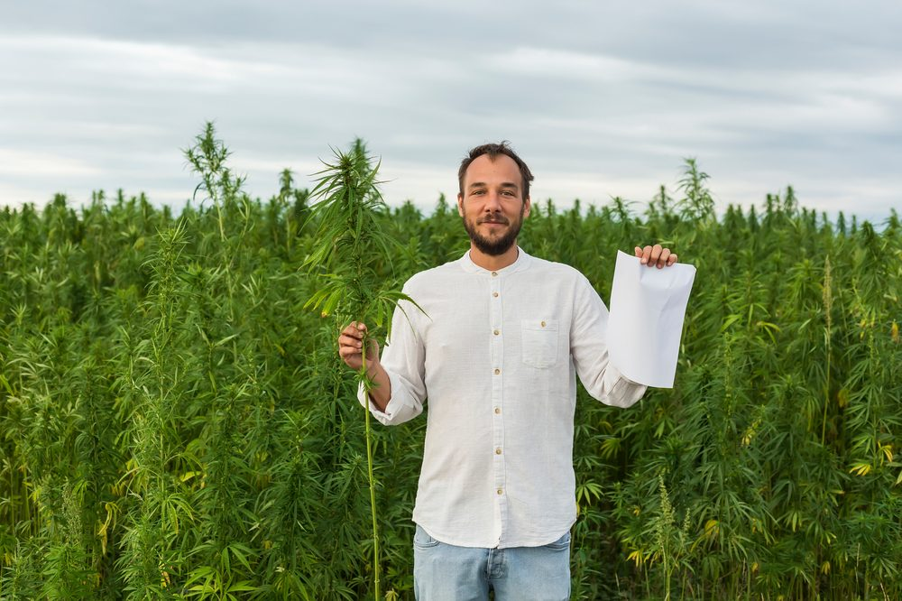 hemp paper held by man in front of hemp field