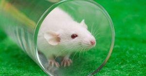 cognitive impairment tests in mice