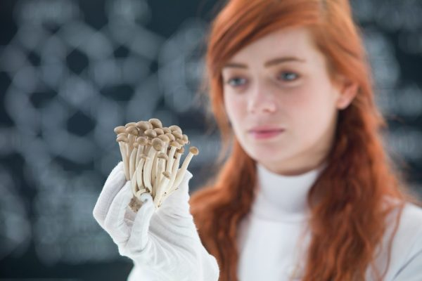 types of mushrooms like this one held by a redheaded doctor will soon be in medicinal use