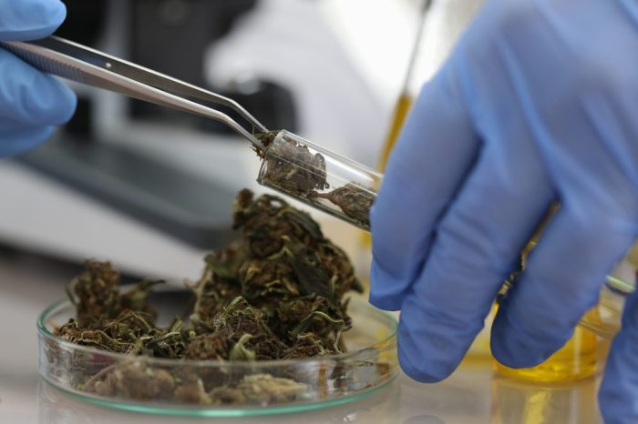 CANNABIS RESEARCH IN AMERICA underway with cannabis being put in test tube