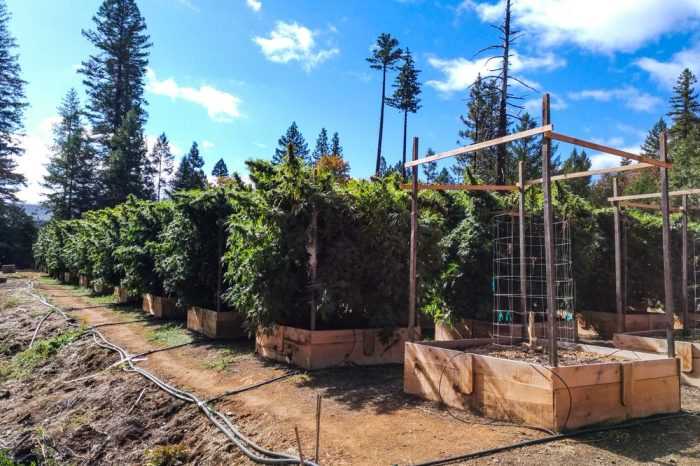 donations couldn't be made by the growers of this nice cannabis farm