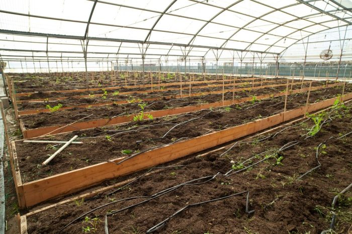 Are You Ready for a cannabis shortage like this, represented by empty greenhouse after a cultivation