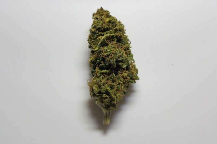charlottes's web bud, not a pharmaceutical cbd