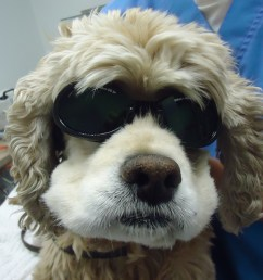 dog wearing sunglasses [ 2592 x 1944 Pixel ]