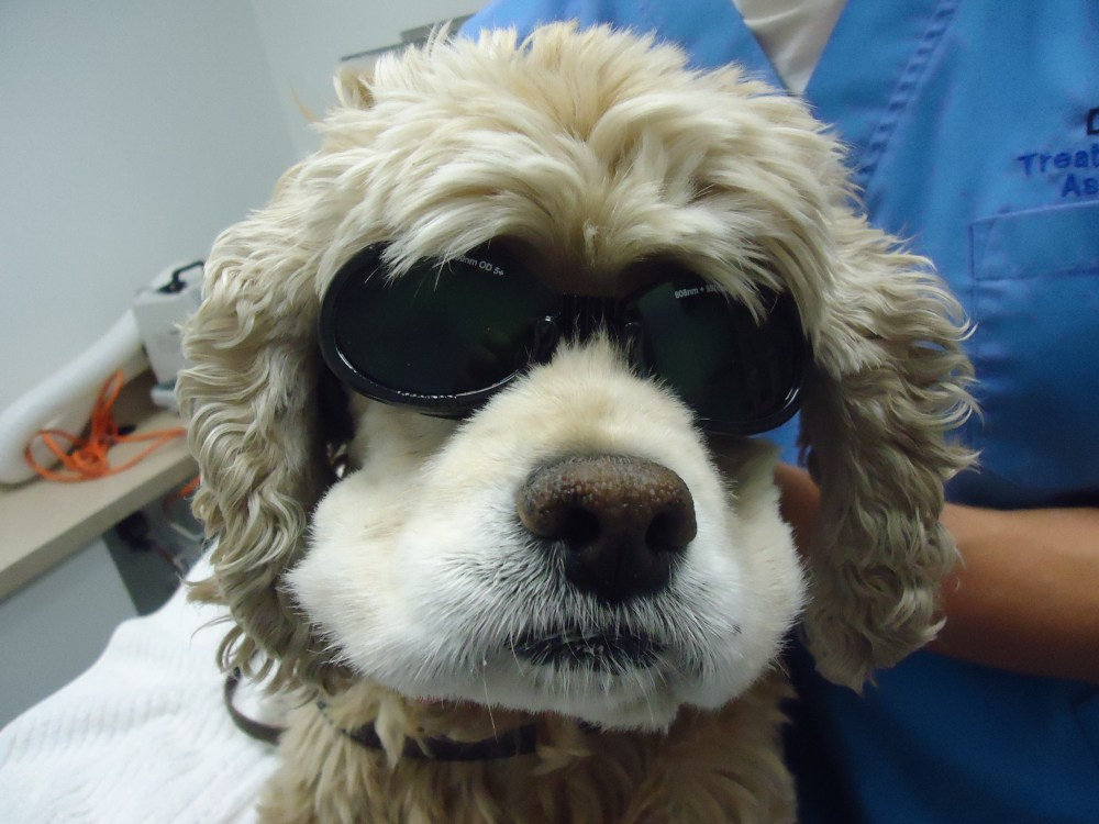 medium resolution of dog wearing sunglasses