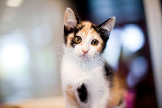 KHS Kitten