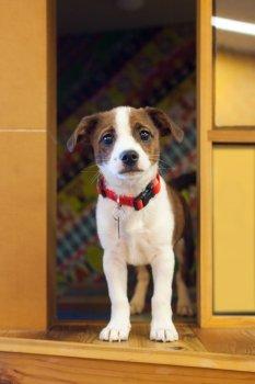 KHS Puppy