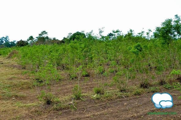 Lagundi Farm 7