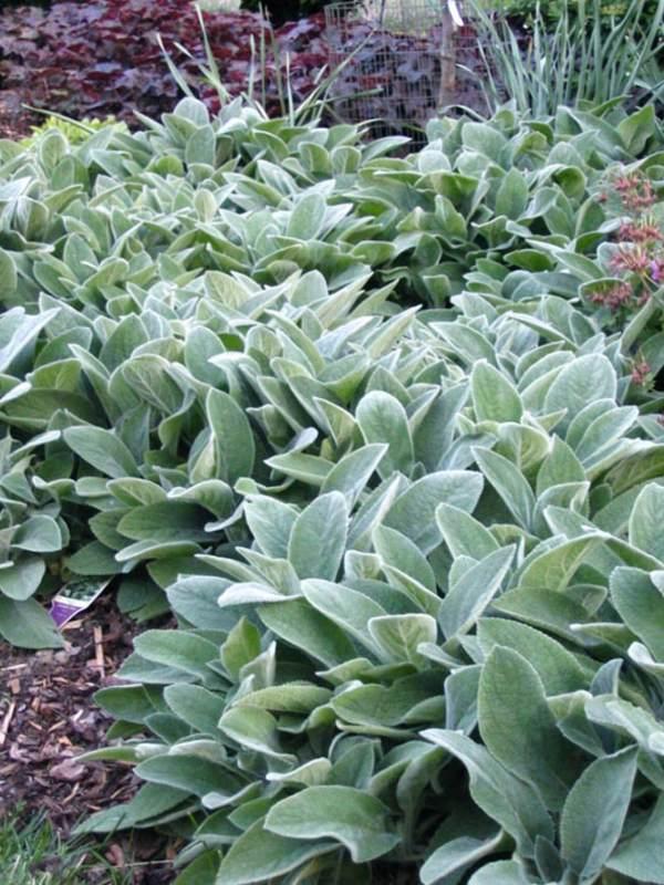 drought tolerant plants dry