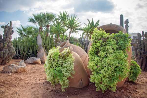 desert style landscaping