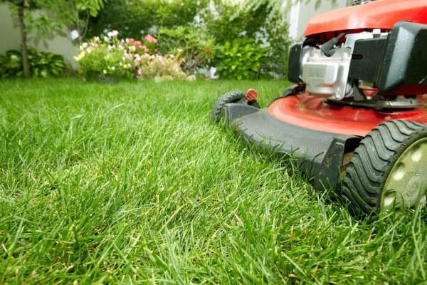lawn service - ryno care