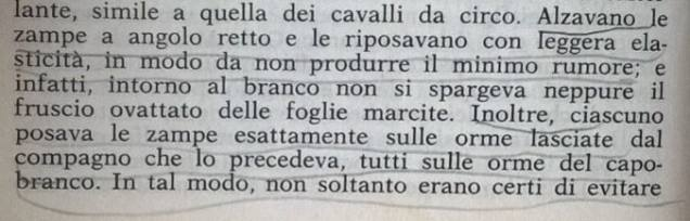 Gianni Padoan - Il Branco Della Rosa Canina - pag. 48
