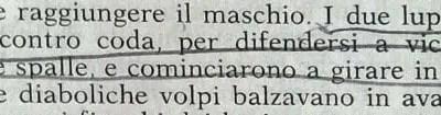 Gianni Padoan - Il Branco Della Rosa Canina - pag. 51