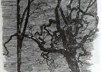 Il paese del tramonto - Bram Stoker