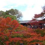 紅葉ライドで東福寺、伏見稲荷神社へ100km