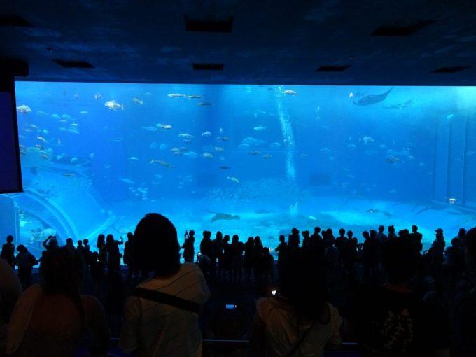 名護から美ら海水族館へ