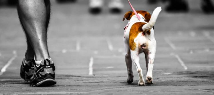 Migliori idee imprenditoriali Dog walking freelance