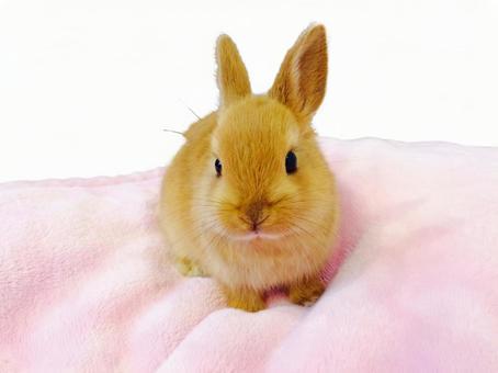 ラビットシステム rabbit FX-EA system