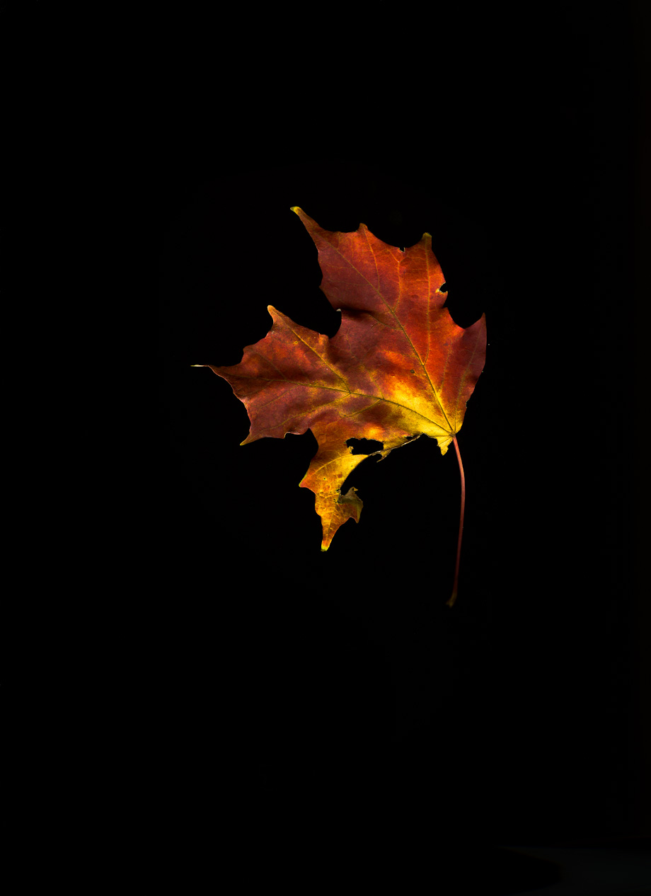 Fall Leaves Falling Wallpaper Project Autumn Leaves Simon Scott Stromberg Photography