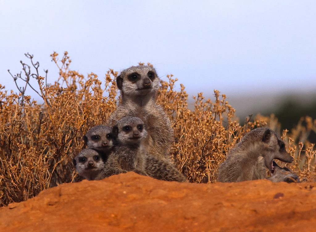 South Africa Animals - Wildlife in South Africa (7)