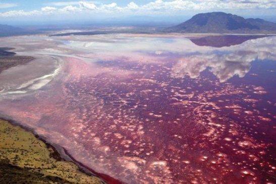 بحيرة النطرون العجيبة في تنزانيا | سائح